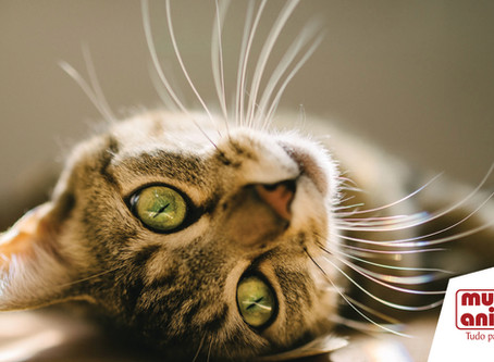 O bigode dos gatos pode ser cortado?