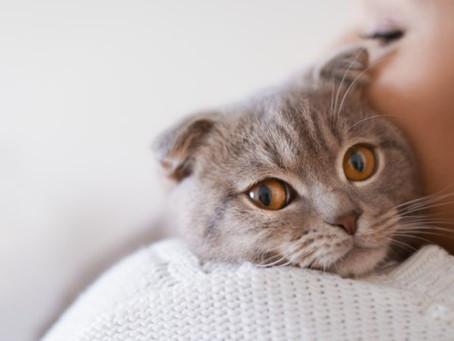 Você sabia que o ambiente pode influenciar o comportamento do seu pet?
