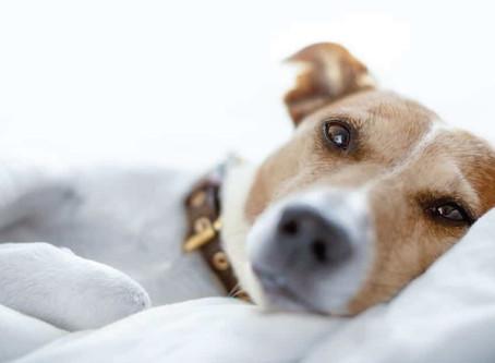 Câncer de pele: os pets podem contrair a doença?