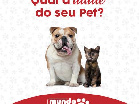 Idade de cão e gato