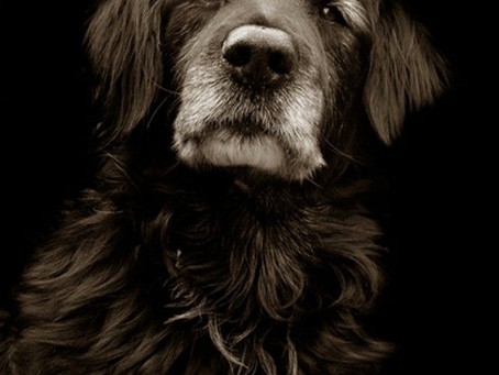 Cães idosos - dicas de como mante-lo saudável