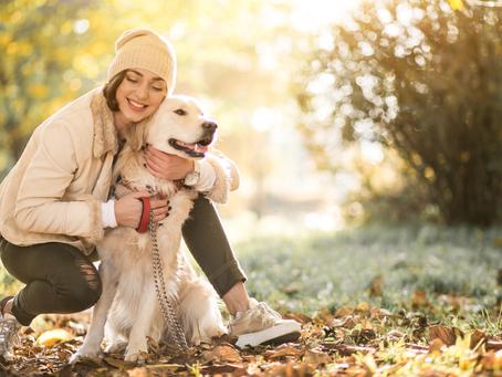 Principais cuidados com os pets no outono