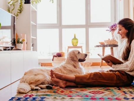 Quais os cuidados com os pets na quarentena?