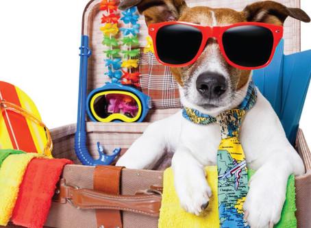 Feriado à vista! Dicas de como cuidar do pet enquanto viaja