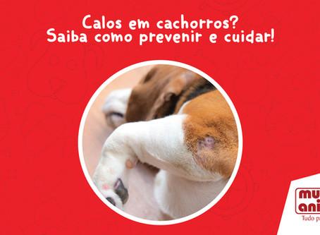 Calos em cachorros? Saiba como prevenir e cuidar!