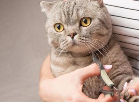 5 passos para você cortar a unha dos seus gatos de maneira fácil e segura