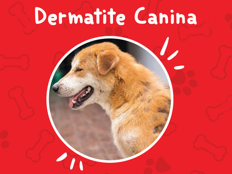 Dermatite canina