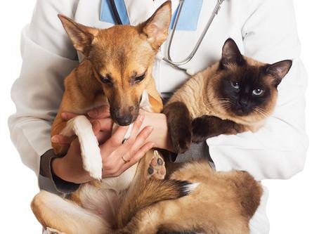 Saiba os principais mitos sobre a castração do seu pet