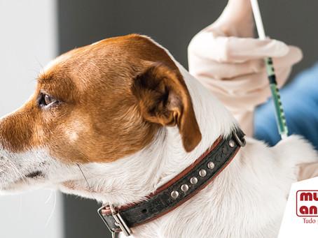 Como está a carteirinha de vacinação do seu pet?