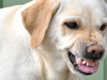 Como reduzir o estresse do meu cachorro