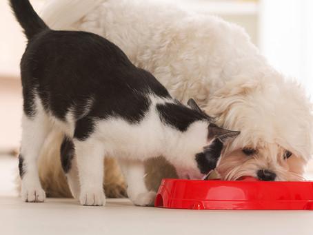 Hábitos que prejudicam a saúde digestiva dos cães e gatos