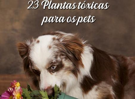 23 plantas para manter longe do seu animalzinho