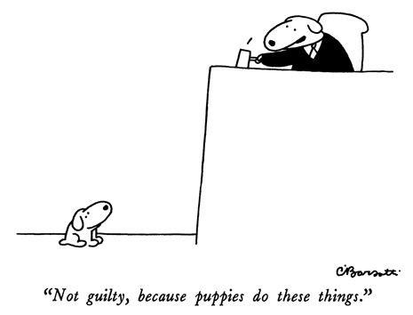 puppies in court.jpg