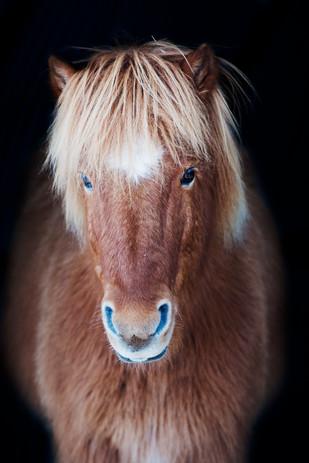 Hest_8648.jpg