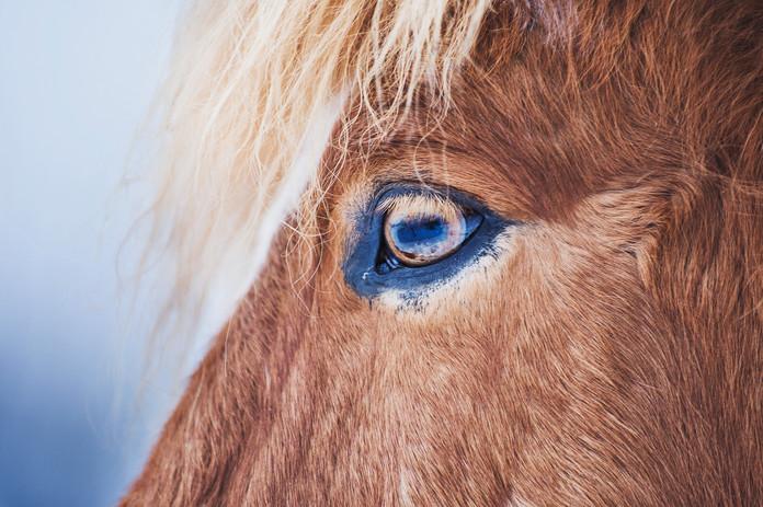 Hest_8581.jpg