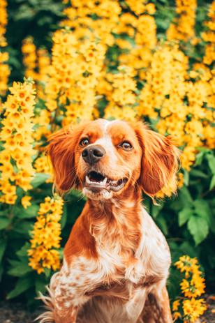 Yellow dog portrait_byIngridHorntvedt.jp