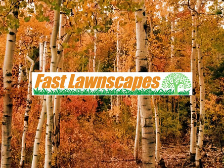 Fast Lawnscapes Services!