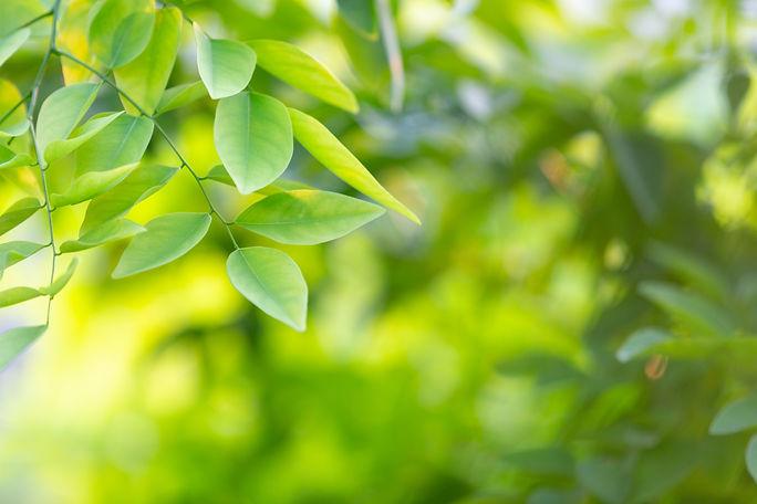 green-leaf-forest.jpg
