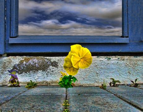 blom-einsemd32-1_1_orig.jpg