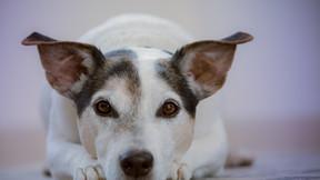 Starromania spendet an Lucky Dogs für Kastrationen
