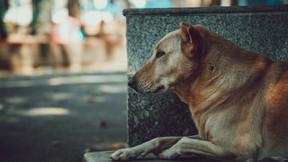 Starromania spendet an SDS für Tierarztkosten