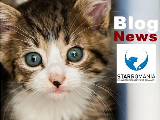 Lage der rumänischen Hunde in den öffentlichen Sheltern.-Liste