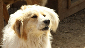 Starromania spendet an SDS für Daniels Hunde