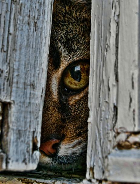 cat-window2_orig.jpg