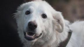 Starromania spendet an Lucky Dogs für Impf- und Futterkosten