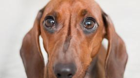 Starromania spendet an Lucky Dogs, Kastrationen
