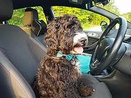 Alfie driving 3.jpg