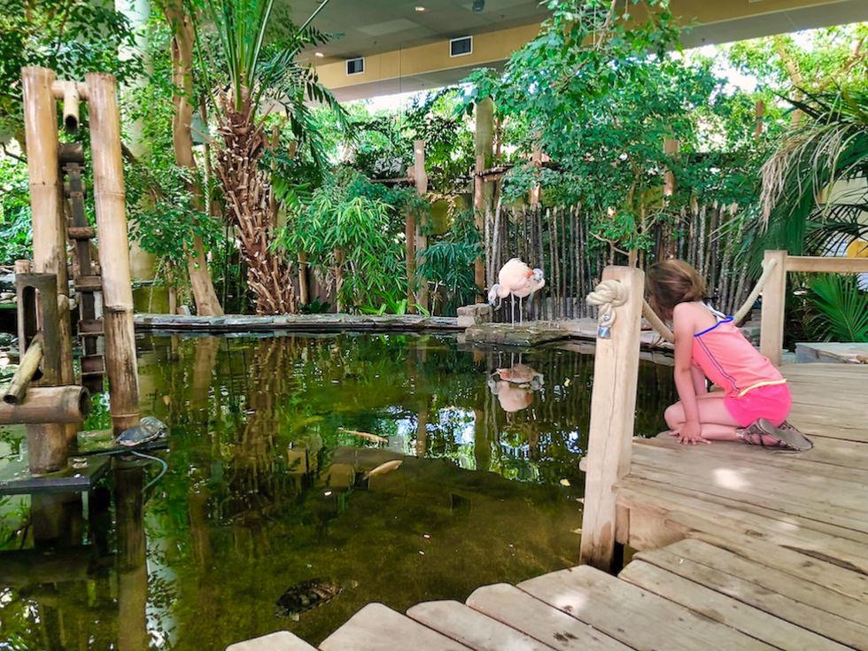 Flamingo's in Dome Port Zelande