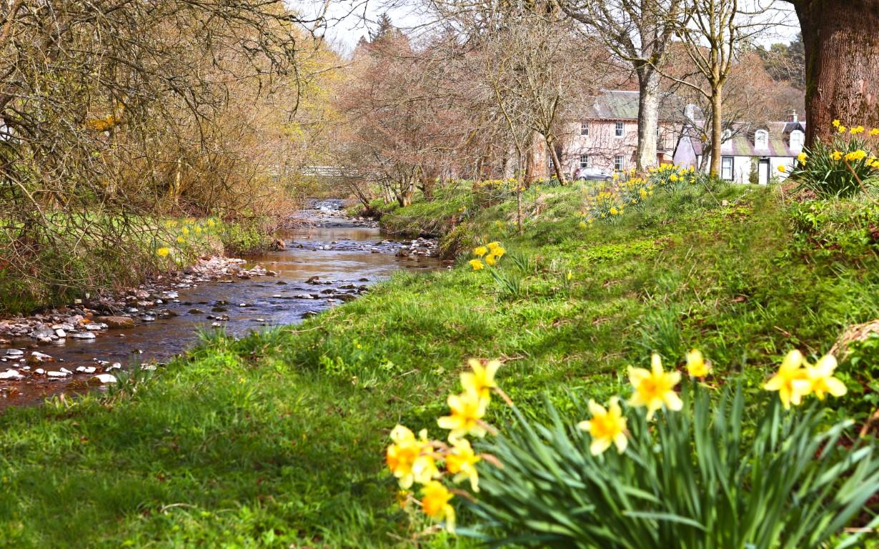 River Lyne & Daffies.jpg