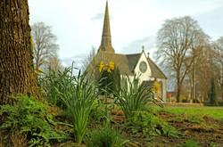 Daffies & St Andrews.jpg
