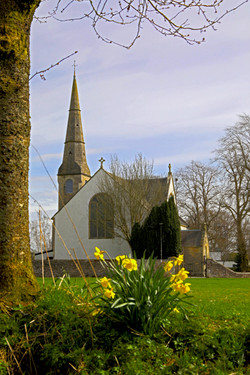 St Andrews with Daffies.jpg
