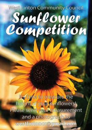 Sunflower Competition - quick before Winter arrives, let's see who has the biggest sunflower
