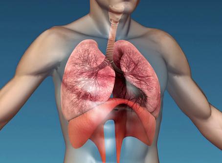 Le diaphragme, véritable clef de voûte du corps humain