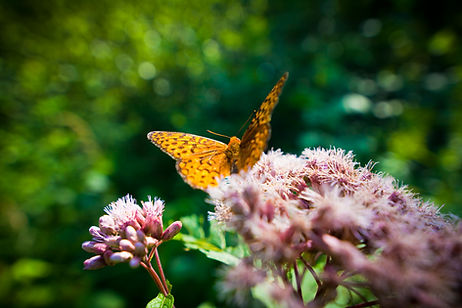 close-up-of-a-butterfly-on-a-flower-PCLU