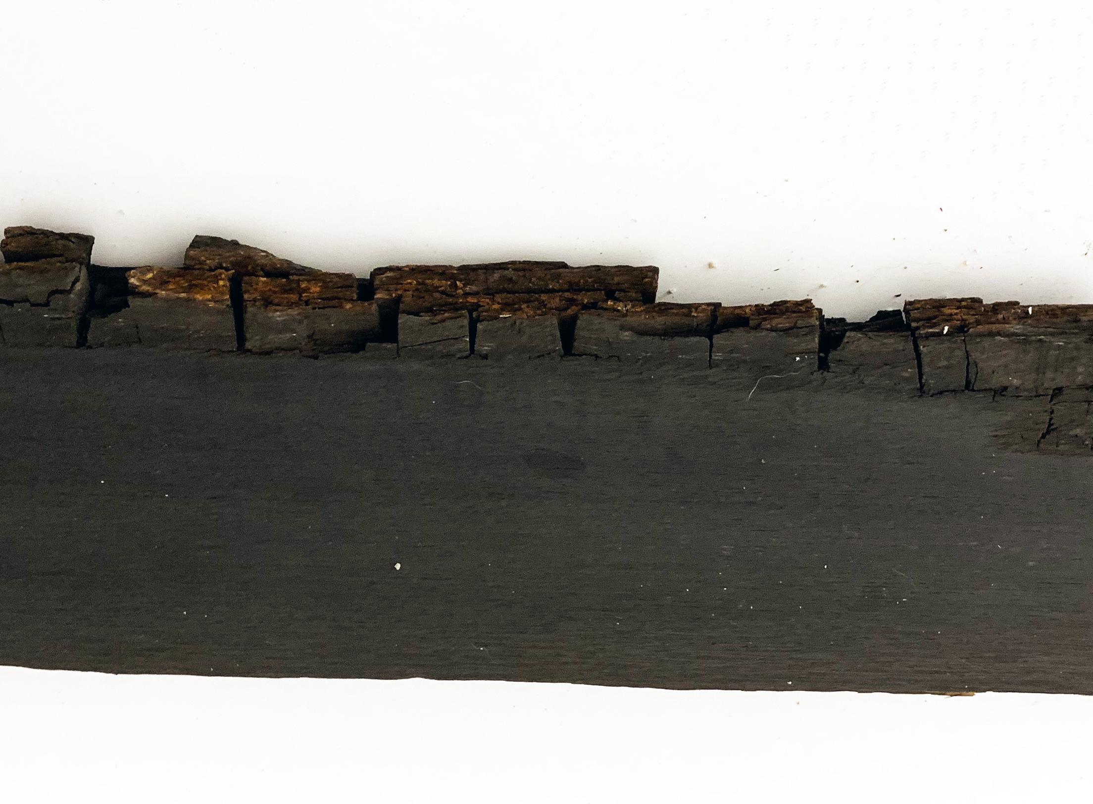 Irish Bog Oak (5000 Years Old)