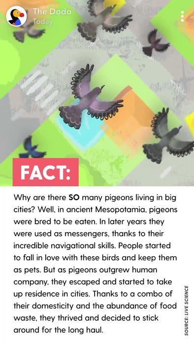 The Dodo | Snapchat Discover 2018