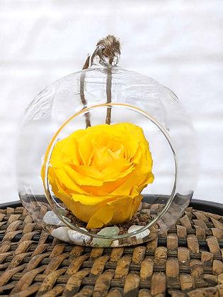 Rose éternelle jaune en verre rond