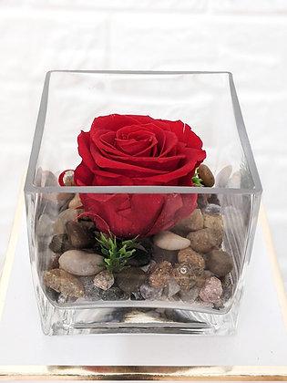 Eternal Rose Cube