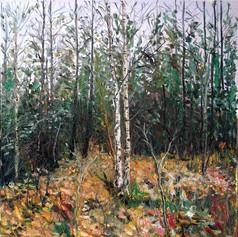 Two birch trees oil on linen 91x91cm.jpg