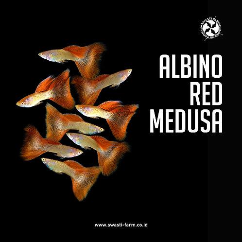 ALBINO RED MEDUSA