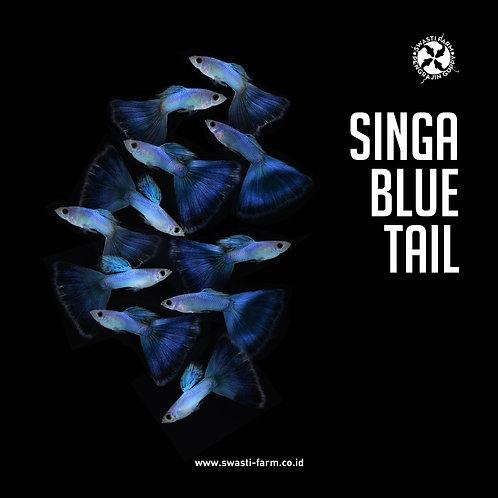 SINGA BLUE TAIL
