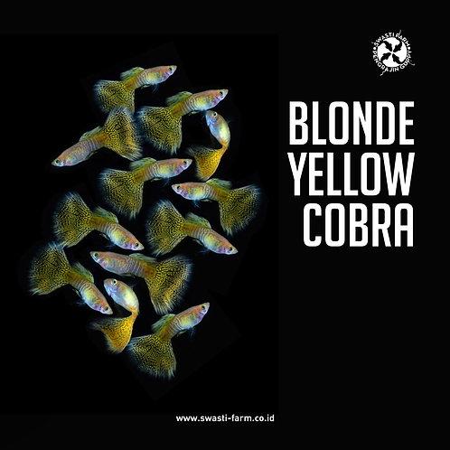 BLONDE YELLOW COBRA