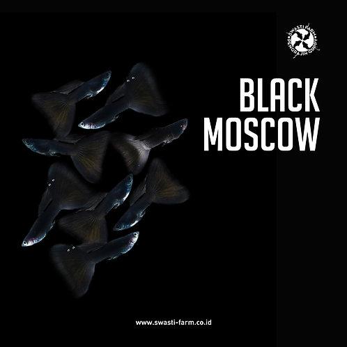 2 PASANG BLACK MOSCOW
