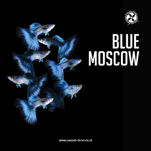 BLUE MOSCOW