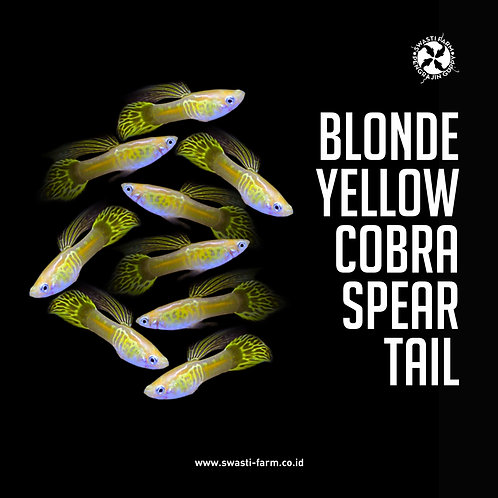 BLONDE YELLOW COBRA SPEAR TAIL