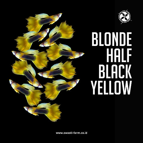 BLONDE HALF BLACK YELLOW